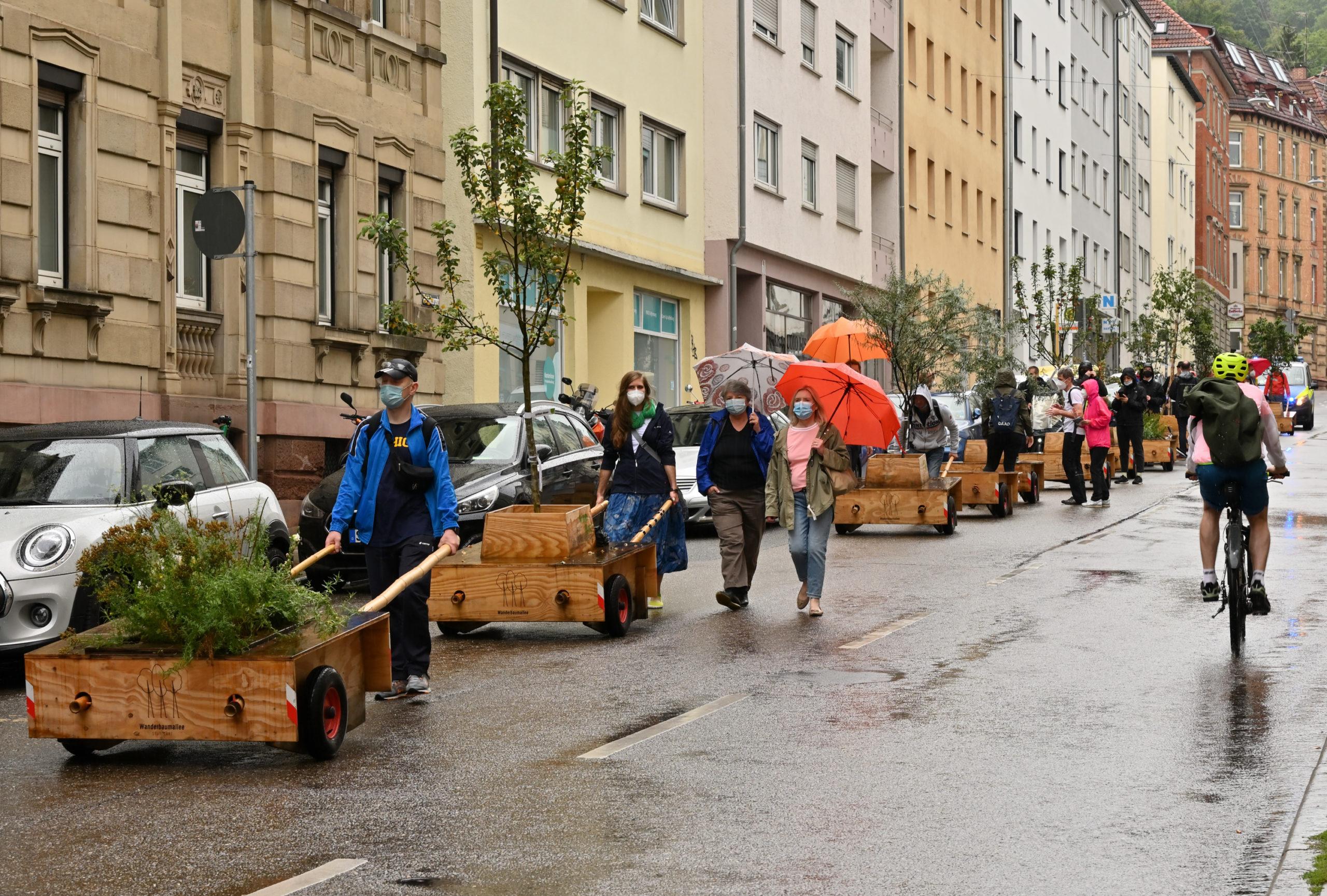 Baumwanderung_Traubenstraße_0806
